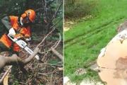 stihl-alajuela-motosierras-trabajando