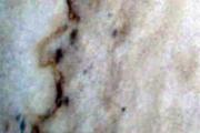 granitec-a-y-m-granito-color-16