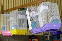 clinica-veterinaria-el-granero-jaulas