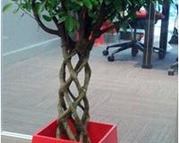 plantas-decorativas